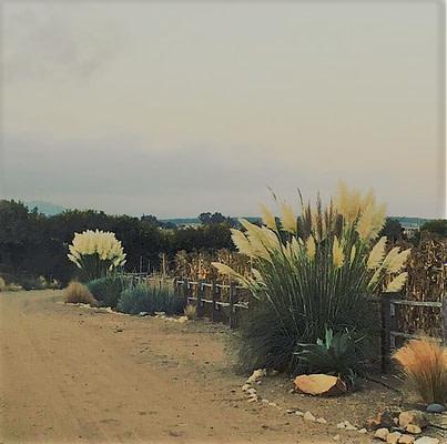 Parque floracion otoñal cortaderas