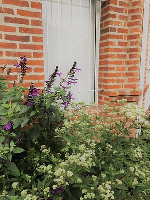 Jardines Floracion de salvias y doctorcito otoño