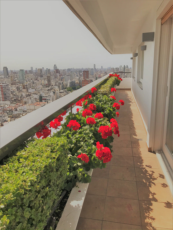 Terraza malvones floreciendo en verano
