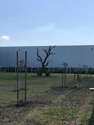 Plantacion arboles Parque Roca