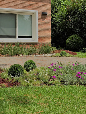 Jardines vista frente buxus redondos