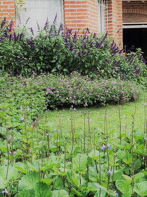 Jardines Floracion primaveral