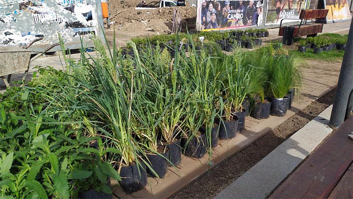 Plantacion nativas