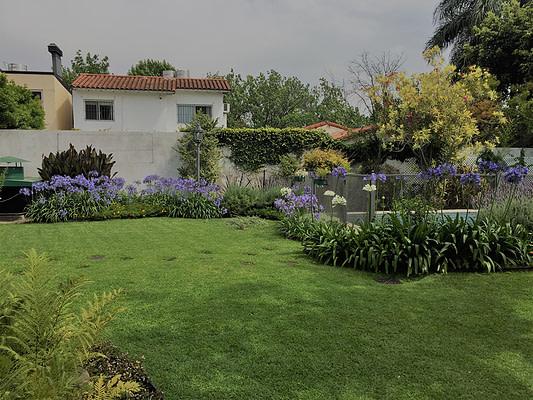 Jardines vista agapanthus en floracion