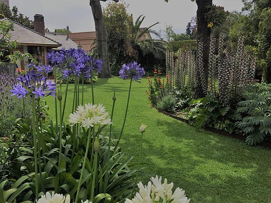 Jardines vista floracion estival acanthus