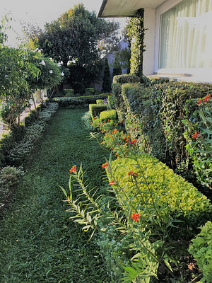 Terraza arbustos podados versus herbaceas que emergen floreciendo
