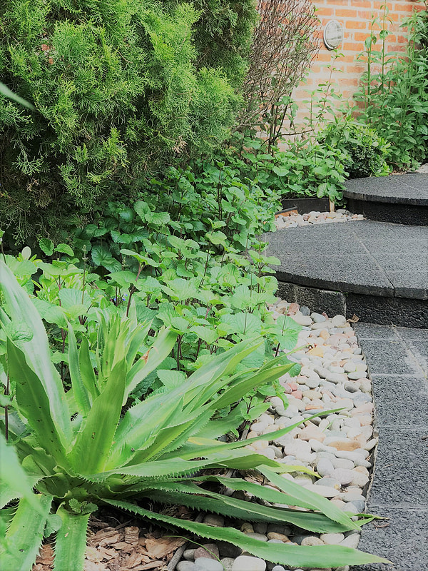 Jardines Contraste texturas
