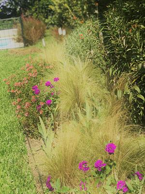 Jardines patio trasero